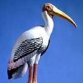 Painted Stork Life Size - Miami Metro Zoo MI, FL