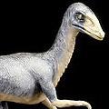 Sinosauropteryx - Miami Metro Zoo, MI, FL